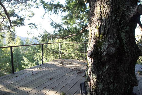treehousedeck.jpg